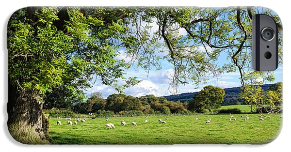 David iPhone Cases - The Beautiful Cheshire countryside - large oak tree frames a field of lambs iPhone Case by David Hill
