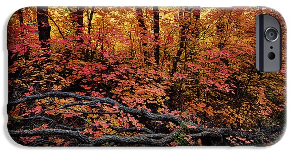 West Fork iPhone Cases - The Beauty of Autumn  iPhone Case by Saija  Lehtonen