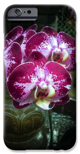 Wet Petals iPhone Cases - The Beauty of Orchids iPhone Case by Julie Palencia