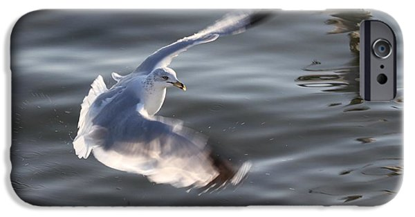 Flying Seagull Pyrography iPhone Cases - The Beauty Of Water Birds iPhone Case by Valia Bradshaw