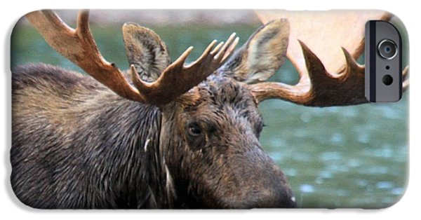Moose In Water iPhone Cases - The Big Rack iPhone Case by Adam Jewell