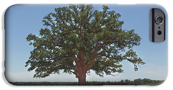 Kay Pickens iPhone Cases - The Big Tree iPhone Case by Kay Pickens