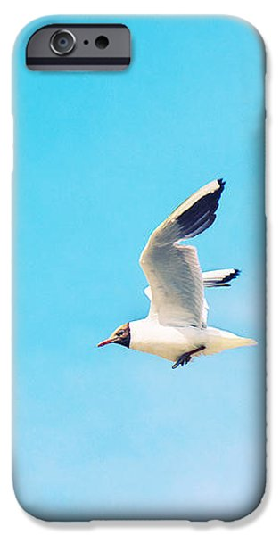 North Sea Mixed Media iPhone Cases - The Black Headed Gull iPhone Case by Angela Doelling AD DESIGN Photo and PhotoArt