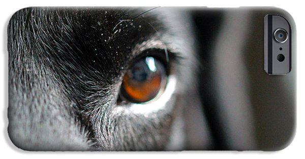 Dog Photograph Canvas iPhone Cases - The Blinds Eyes iPhone Case by Chris Whittle
