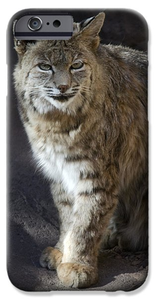 Bobcats iPhone Cases - The Bobcat iPhone Case by Saija  Lehtonen