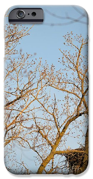 Birds iPhone Cases - The Bodyguards iPhone Case by Bonfire Photography