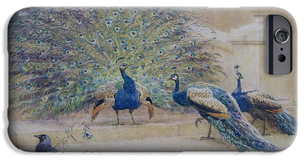 Peafowl iPhone Cases - The Borrowed Plume iPhone Case by John Charles Dollman