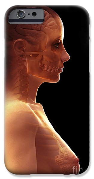 Frontal Bones iPhone Cases - The Brain Female iPhone Case by Science Picture Co