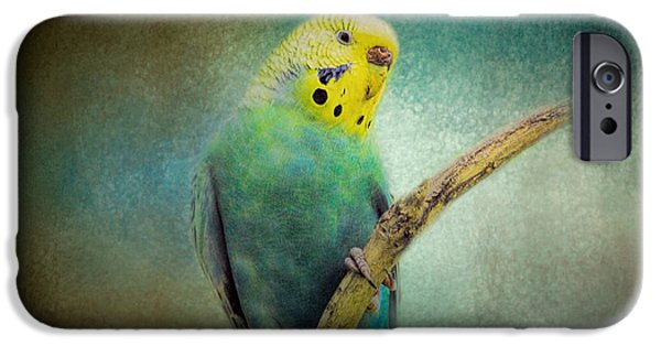 Parakeet iPhone Cases - The Budgie Collection - Budgie 1 iPhone Case by Jai Johnson