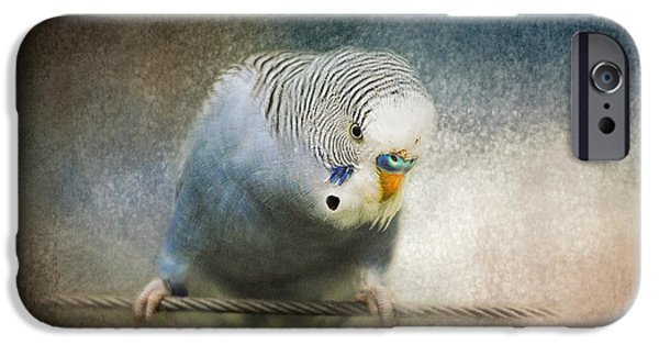 Parakeet iPhone Cases - The Budgie Collection - Budgie 3 iPhone Case by Jai Johnson