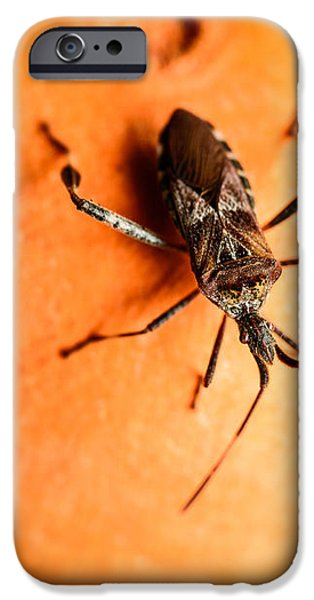 The Bug iPhone Case by Marco Oliveira