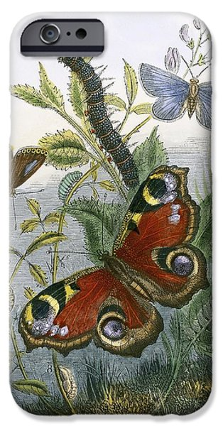Caterpillar iPhone Cases - The Butterfly Vivarium iPhone Case by English School