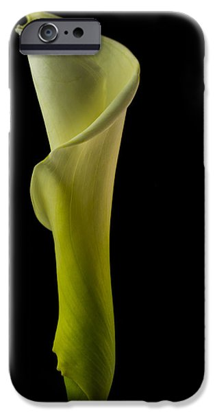 Painter Photographs iPhone Cases - The Calla Lily Flower Color iPhone Case by David Haskett