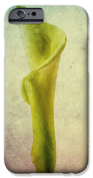 Painter Photographs iPhone Cases - The Calla Lily Flower in Texture iPhone Case by David Haskett