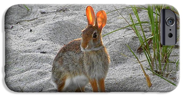 Mashpee iPhone Cases - The Cape Cod Easter Bunny iPhone Case by CapeScapes Fine Art Photography