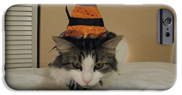 Witch Halloween Cat Wicca iPhone Cases - The Cat Is The Witch iPhone Case by Frederick Holiday
