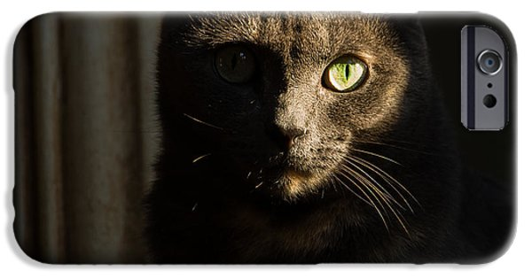 Statue Portrait iPhone Cases - The Cat Soul Stare iPhone Case by Christy Cox