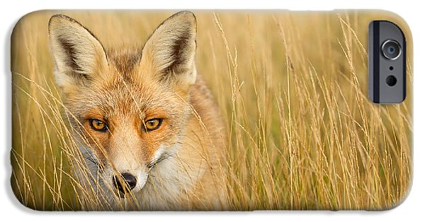 Hiding Photographs iPhone Cases - The Catcher in the Grass iPhone Case by Roeselien Raimond