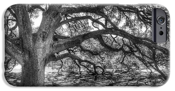 Tree Art iPhone Cases - The Century Oak iPhone Case by Scott Norris