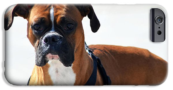 Boxer Dog iPhone Cases - The Challenge iPhone Case by Camille Lopez