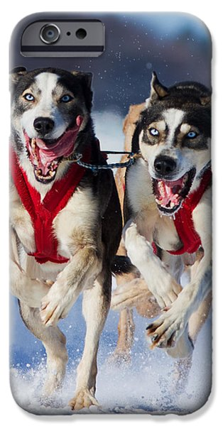 Husky iPhone Cases - The Champions iPhone Case by Mircea Costina Photography