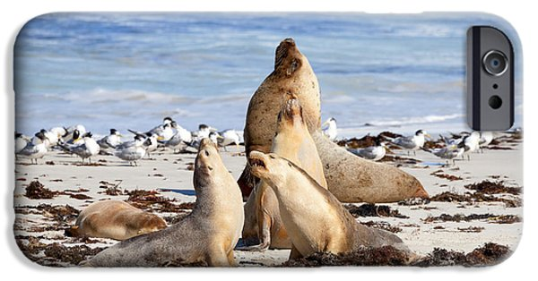 Sea Lions iPhone Cases - The Choir iPhone Case by Mike Dawson