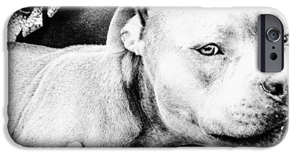 Bull Pyrography iPhone Cases - the coolest PIT  iPhone Case by DON  Simou