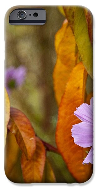 THE COSMOS IN THE PEACH TREE iPhone Case by Theresa Tahara