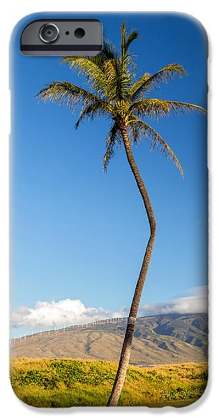 Village By The Sea iPhone Cases - The Crooked Palm Tree iPhone Case by Pierre Leclerc Photography