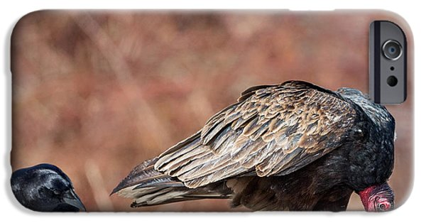 Crows iPhone Cases - The Crow And Vulture iPhone Case by Bill  Wakeley