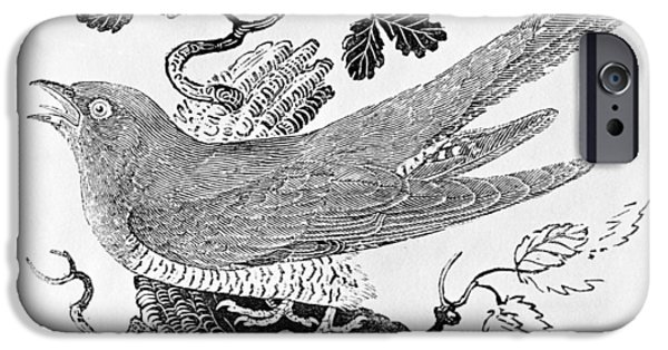 Print Photographs iPhone Cases - The Cuckoo Cuculus Canorus From The History Of British Birds Volume I, Pub. 1797 Wood Engraving iPhone Case by Thomas Bewick