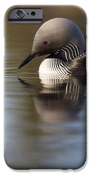 Loon iPhone Cases - The Curve of a Neck iPhone Case by Tim Grams