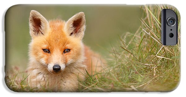 Fox Kit iPhone Cases - The Cute Kit iPhone Case by Roeselien Raimond