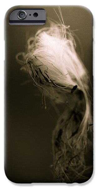 Macro iPhone Cases - The Dance Of  Destruction And Demise iPhone Case by Shane Holsclaw