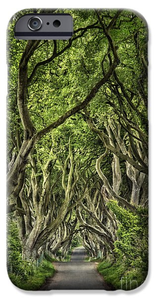Mystic iPhone Cases - The Dark Hedges iPhone Case by Evelina Kremsdorf
