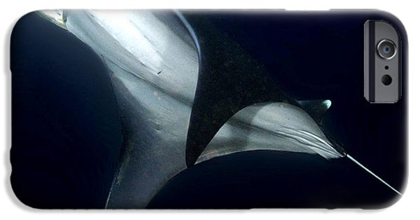 Devil Ray iPhone Cases - The Devil You Know iPhone Case by Paula Marie deBaleau