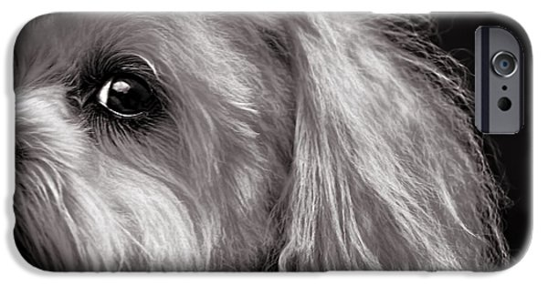 White House iPhone Cases - The Dog Next Door iPhone Case by Bob Orsillo
