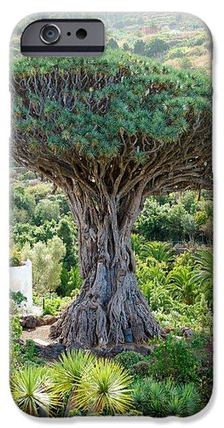 The Dragon Tree / El Drago Milenario iPhone Case by Gavin Lewis