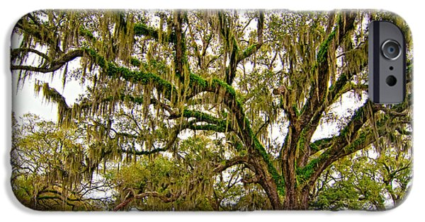 Oak Alley Plantation iPhone Cases - The Essence iPhone Case by Steve Harrington
