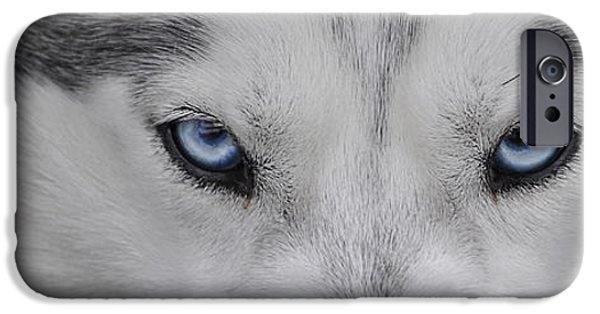Husky iPhone Cases - The Eyes of a Husky iPhone Case by Alisha Lang