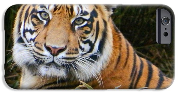 Smithsonian iPhone Cases - The Eyes Of A Sumatran Tiger iPhone Case by Emmy Marie Vickers