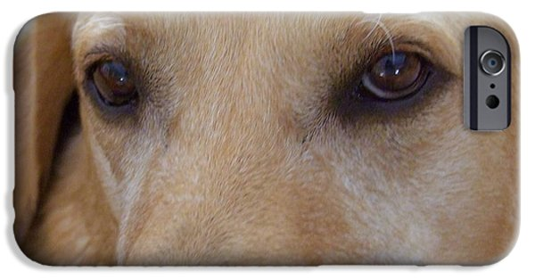Puppies iPhone Cases - The Eyes Say It All iPhone Case by Mary Deal