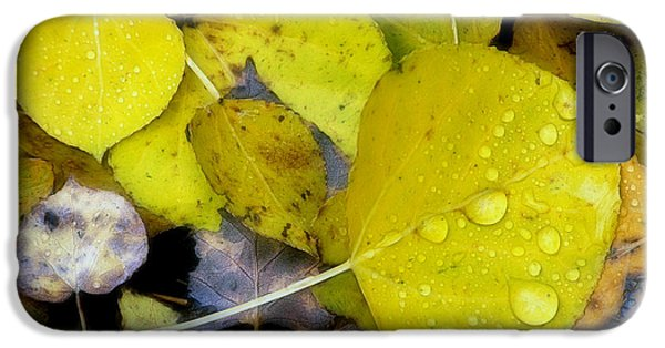 Autumn Leaf On Water iPhone Cases - The Face Of Fall iPhone Case by Bill Morgenstern