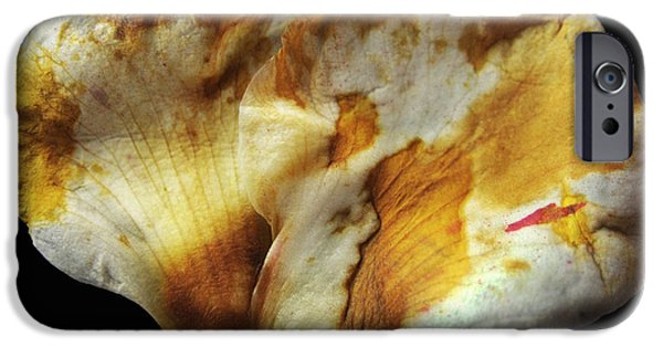 Flower Design Photographs iPhone Cases - The Fallen iPhone Case by Dan Holm