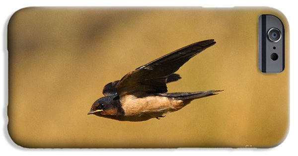 Barn Swallow iPhone Cases - First Swallow Of Spring iPhone Case by Robert Frederick