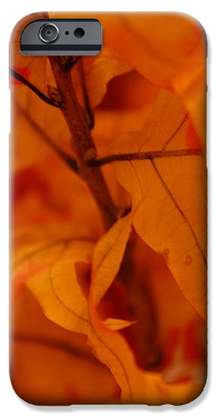 The Fire Within iPhone Case by Michael Glenn