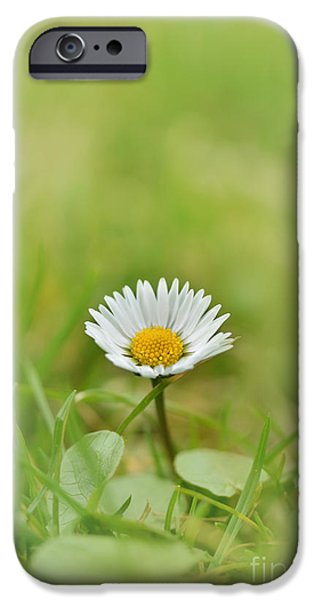 Floral Photographs iPhone Cases - The first white daisy iPhone Case by Jaroslaw Blaminsky