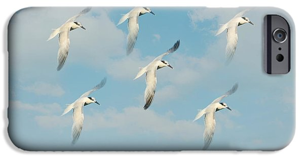House Art Photographs iPhone Cases - The Flight iPhone Case by Kim Hojnacki