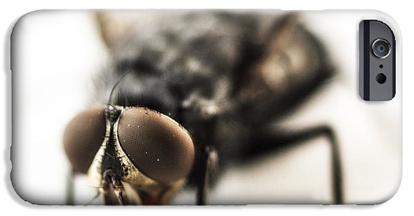 Magnification iPhone Cases - The Fly iPhone Case by Marco Oliveira