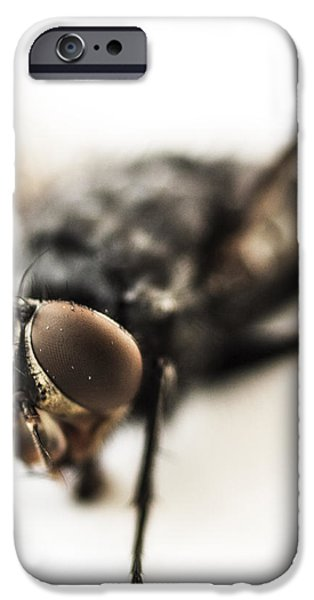 The Fly iPhone Case by Marco Oliveira